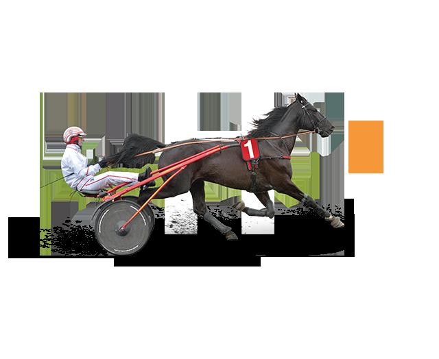 059b90b82b Hipp Hipp Hipp - Hippodrome Expérience Fidélité LeTROT